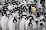 """Programa 21: """"Pingüinos y memorias"""""""