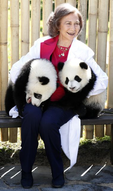reina-sofia-osos-panda